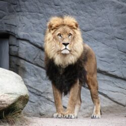 Zoologické zahrady LEVANTE